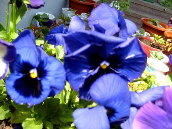 s6309675-albastre